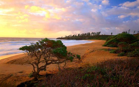 hawaii, браун, world, природа, geography, limited, cosmetics, группа,