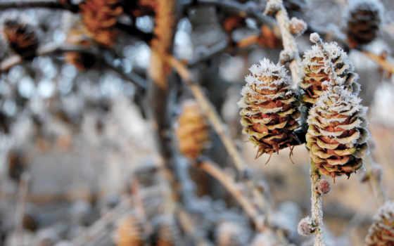 шишки, pinecones