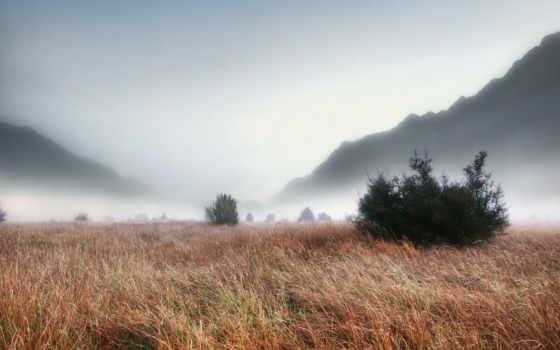 туман, трава