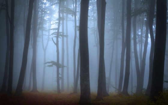 деревя, les, пейзаж