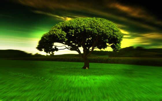 дерево, одинокое, among