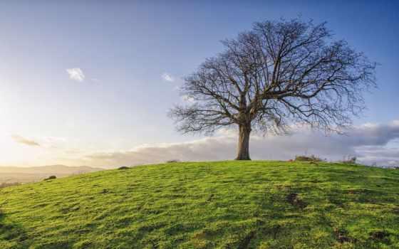 взгляд, top, resolution, дерево, кб, play,