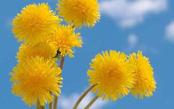 весна, цветы, summer