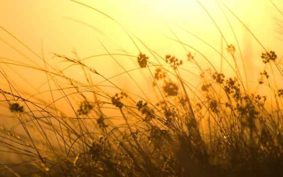 оранжевый, ветер, sun, трава, sunray, природа, high,