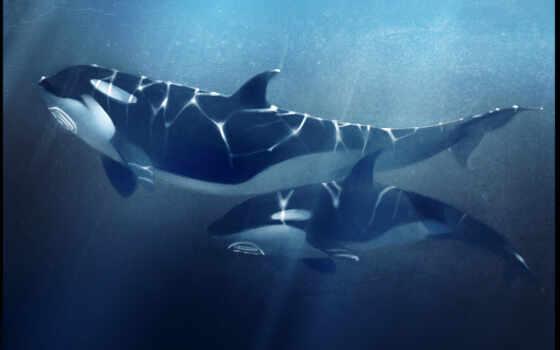 касатка, море, ciorano, depth, гора, orca, прыжок, два, спасение