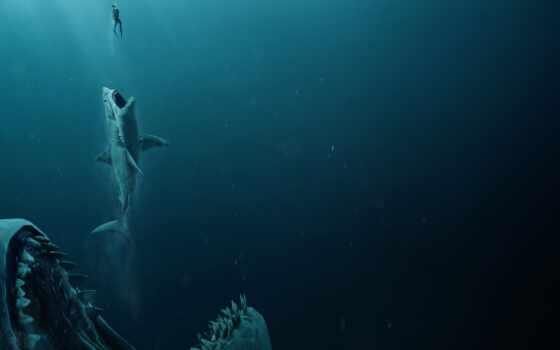 акула, челюсть, мегалодон, сниматься, эволюция, dunkleosteya, human, még, мужчина