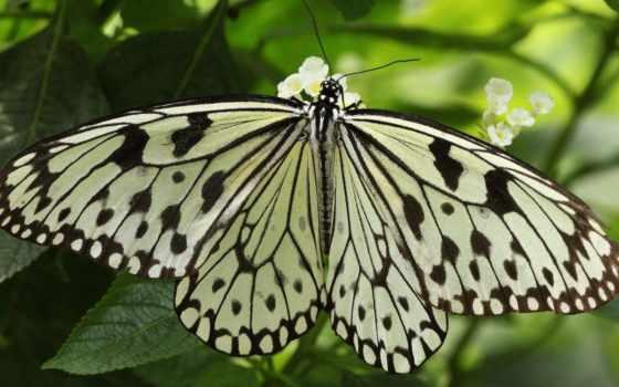 бабочка, насекомое Фон № 23930 разрешение 1920x1080