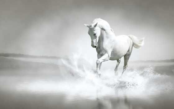 лошадь, берег, река, вода, брызги, бег, white,