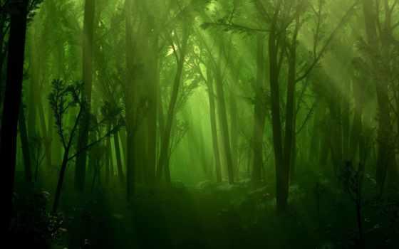лес, туман, деревя