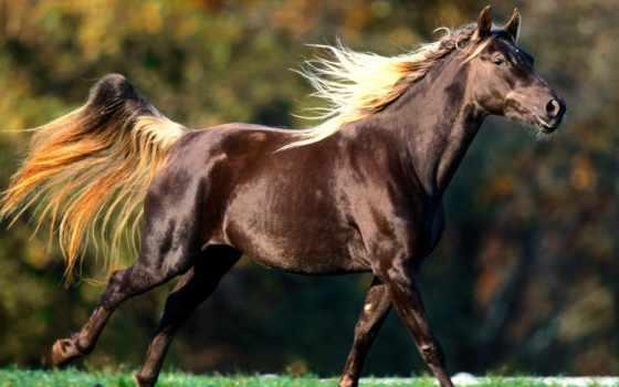 лошадь, лошади, лошадей