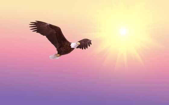 , орел, птица, небо,