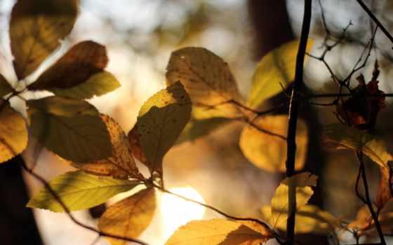 листва, свет, осень, sun, желтые, макро, рисунки, branch, размытость, трава,