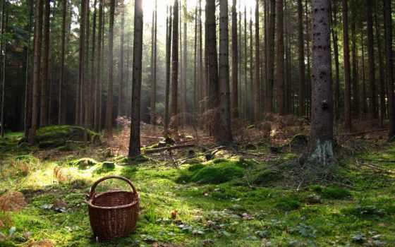 лес, поляна, mushroom, коллекция, landscape, card