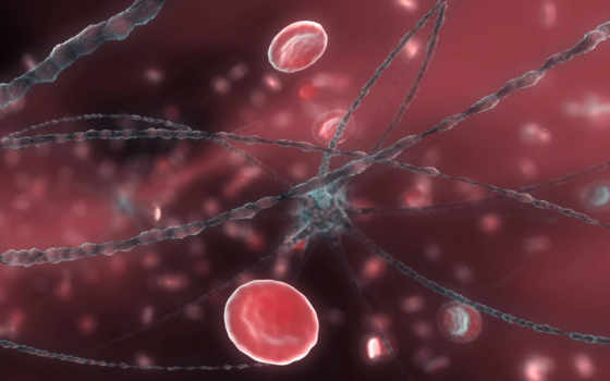 cells, blood