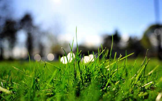 газон, трава, зелёный