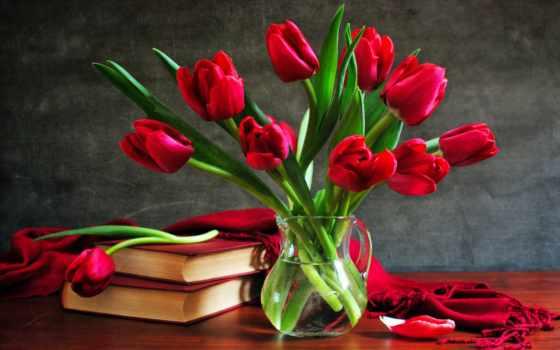 тюльпаны, марта, тюльпанов
