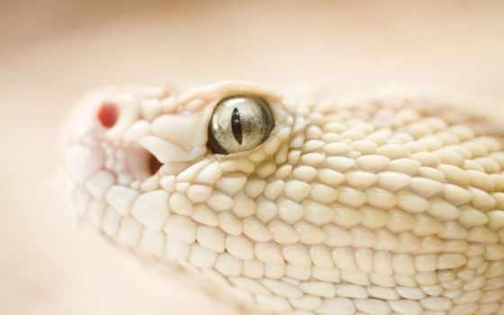 змея, просмотреть, змеи