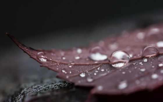 water, drops, full, макро, drop, капли,