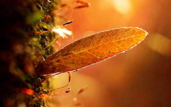 , оранжевый, лист, свет, трава,