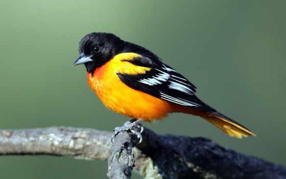 birds, природа, птица, free,