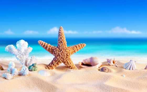 leto, zvezda, ракушка, otpusk, бесплатный, tema, морской, tropik, more, пляж, ochko