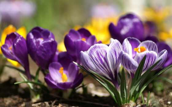 весна, ранняя, весны