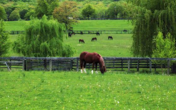 пастбище, лошади, трава, зленая, весна, одуванчики,