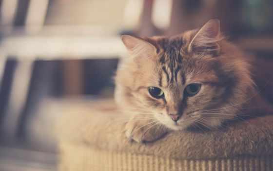 животные, cats, кот