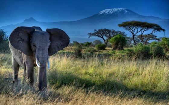 слоны, слон, природа