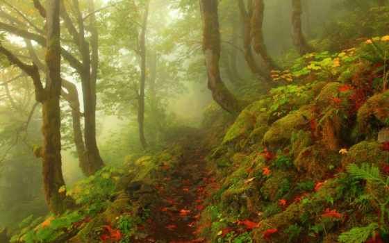 осень, лес, foggy, photography, красавица, mist, pictures, landscape, pinterest,