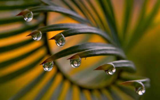 роса, drop, листва, лист, природа