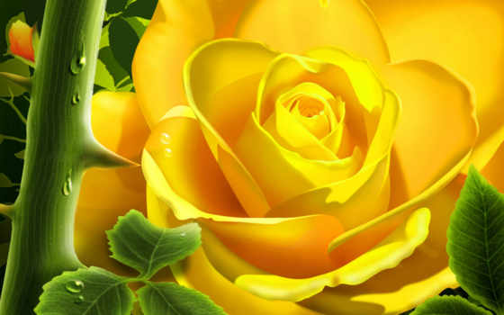 rose, цветы, yellow, download, сад, шипы, desktop, картинка, free, pictures,