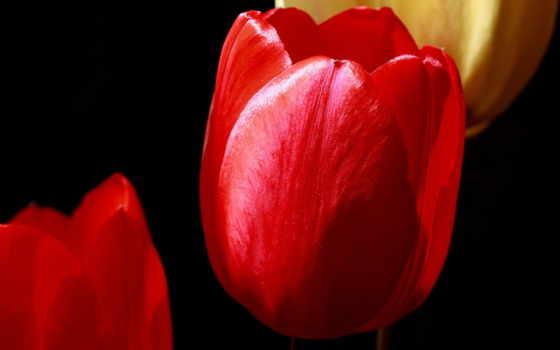 тюльпаны Фон № 42119 разрешение 2560x1600