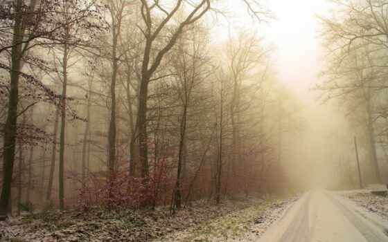 природа, снег, winter