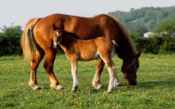 baby, animals, лошадь