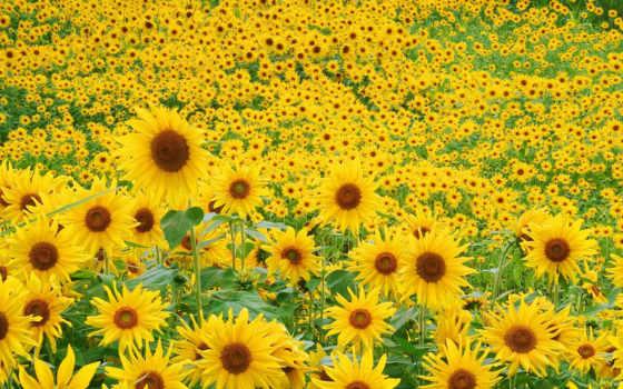 flores, papel, parede Фон № 114015 разрешение 1920x1200