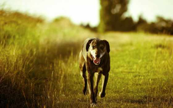 собака, running, summer, спать, pes, free, high,