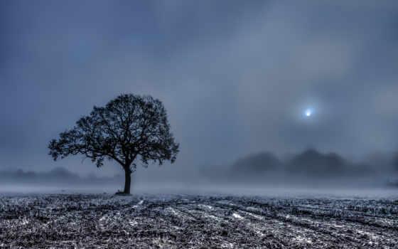 дерево, поле, жнивьё, одинокое, фотографий, финляндия, protocol, красивые, рисунки, zhivotnye, зелёный,