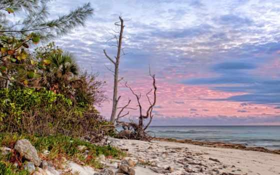 пляж, берег, песок, tropics, пальмы, ocean,