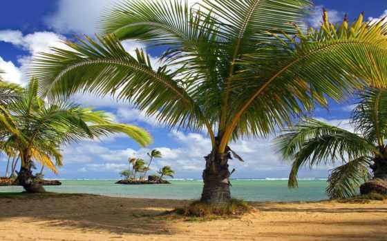 природа, фоны, пляж