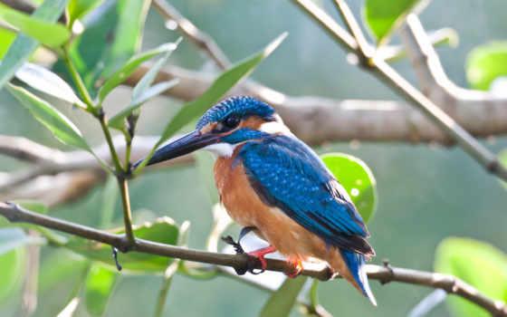 kingfisher, птицы, gif, анимированные, rizhaya, анимация, яndex, коллекции, slow, карточек,