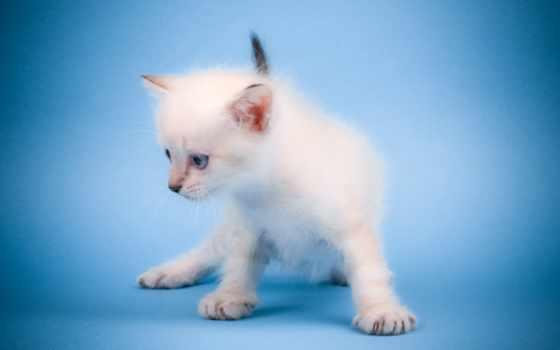 mew, cat