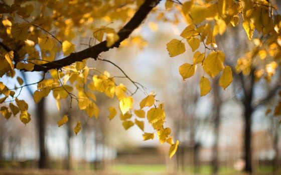 природа, осень Фон № 32073 разрешение 1920x1080