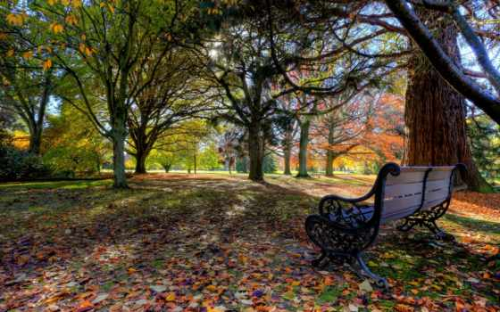 pollard, park, blenheim, new, zealand, осень, скамейка, листья, деревья, новая, ней,