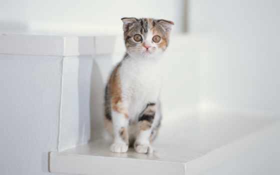 котенок, картинка