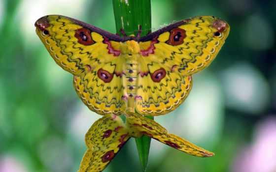 бабочки, kartinka, makro