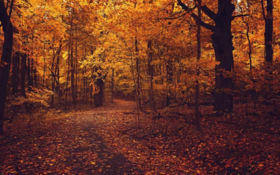 осень, листья, деревя Фон № 99008 разрешение 1920x1200