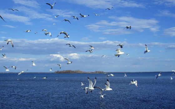море, чайки, landscape, небо,