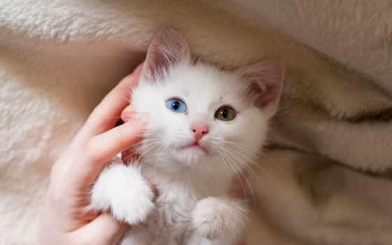 white, кот, desktop