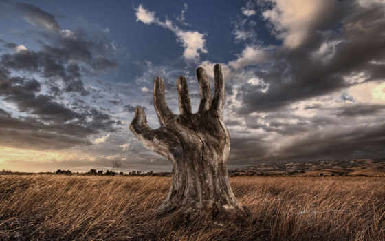 рука, дерево, дерева, фотоманипуляция, twitter, josh, sommers, territory, дизайнера,